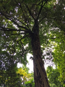 Tree creepers